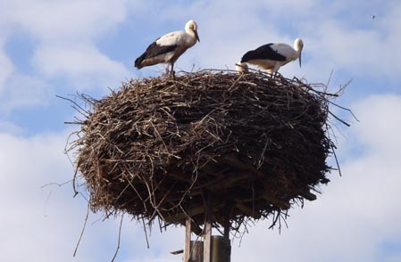 storchennest_in_neuhof